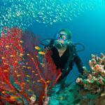 Traduzioni industria subacquea